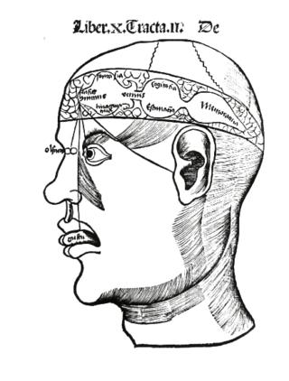 Brain,_G_Reisch